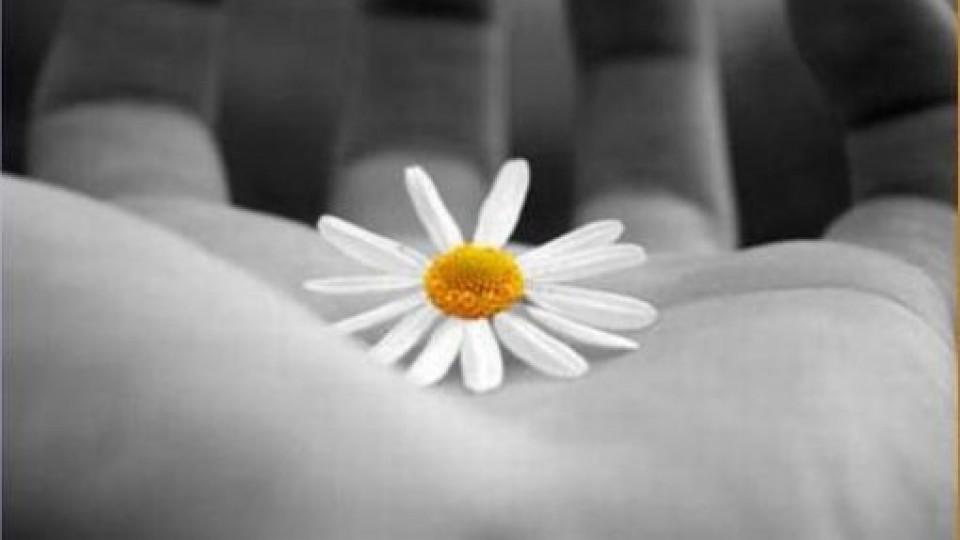 mano_fiore_530